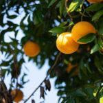 オレンジの香りはポジティブになれる、だけでない!実はもっと深い意味があった!!