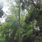 森の中に入ると、誰もがする深呼吸。でもどうして深呼吸したくなるのでしょう?森林浴の正体は?
